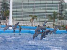Waar leven dolfijnen wikikids